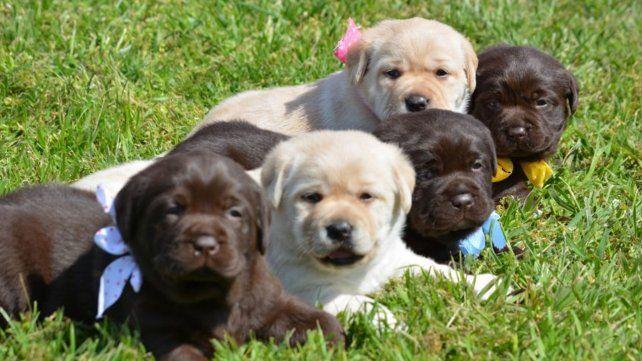 El ministerio de Seguridad nacional abrió un concurso para ponerle nombre a cuatro perritos