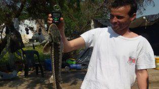 Encontraron un exótico pez en una laguna santafesina