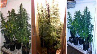 Se peleó con su novio y denunció a la Policía que él tenía plantas de marihuana en su casa