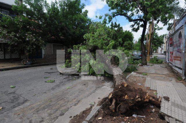 Destrozos. En Dorrego al 3400 cayeron ramas y un árbol de importantes dimensiones.