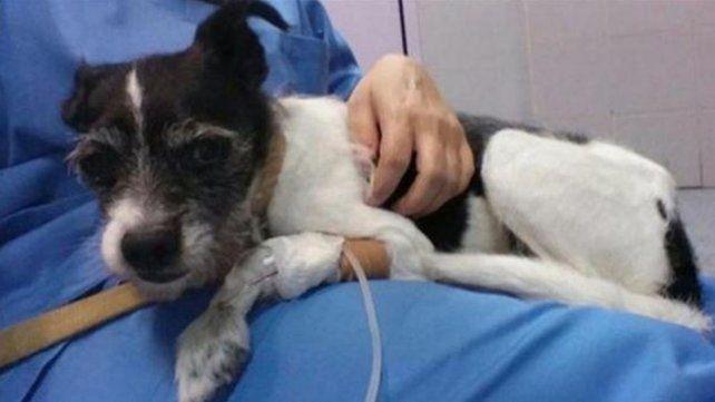 Una mujer le dio psicofármacos a su perro porque la molestaba