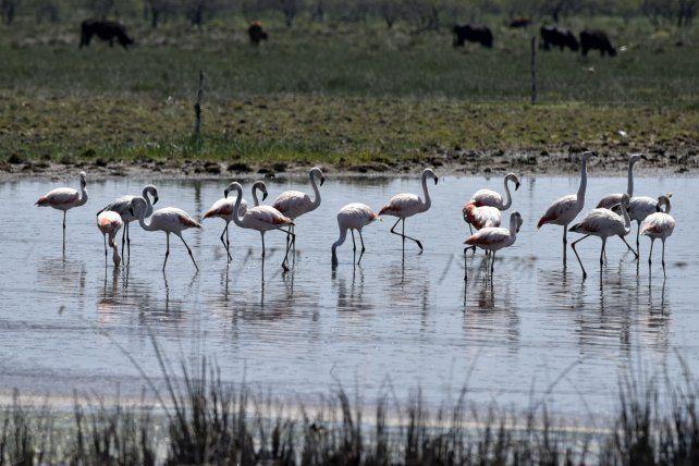 Añapiré: el paraíso de los flamencos rosados ya está cerca de ser reserva