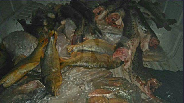 Cayastá: secuestraron decenas de pescados depredados en un control policial