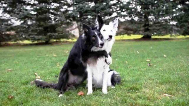 Envy y Zain: dos perros rescatados que están causando revuelo