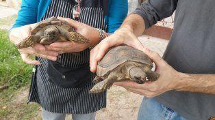 Trasladaron 49 tortugas de tierra a la Granja La Esmeralda