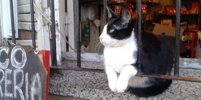 El gato que atiende un kiosco