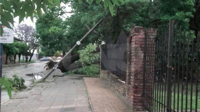 Poste y árbol caídos. Una imagen mandada ayer de tarde tras la tormenta