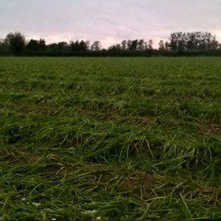 Desolación. Es el sentimiento que invade a los productores y trabajadores de la localidad.