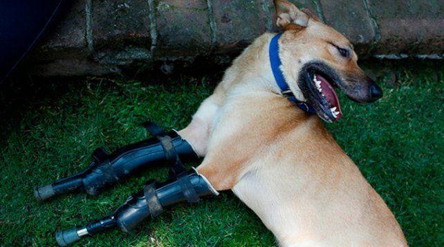La conmovedora historia de Pay de Limón, el perro torturado por Los Zeta