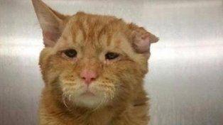 El gato más triste del mundo tuvo su final feliz