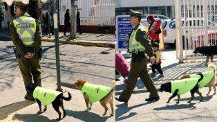 Un grupo de policías adopta a perros callejeros