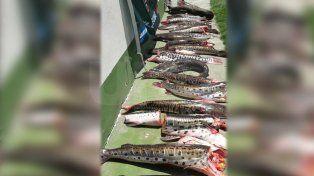 Secuestraron más de 120 especies depredadas en San Javier y Vera