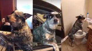 ¿El mejor Mannequin Challenge? ¡El de este perro!