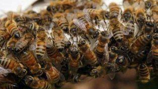 Murieron dos personas en Tucumán tras ser devoradas por un enjambre de abejas