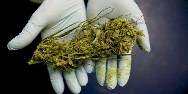 Ley de acceso seguro al cannabis medicinal: Hoy es un día totalmente emotivo