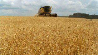 La cosecha de trigo avanza en Santa Fe y se sembraron 30 mil hectáreas de arroz