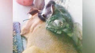 El gato a veces se acuesta arriba de la perra