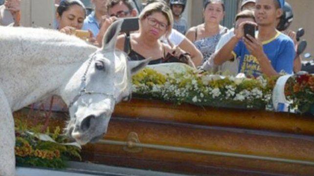 Sereno, el caballo que lloró durante la despedida de su jinete
