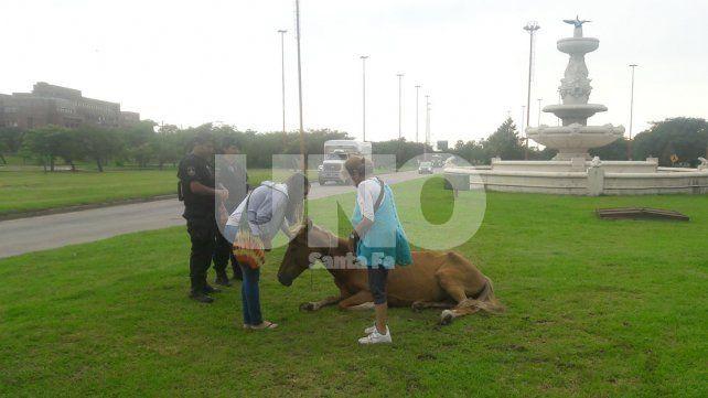 Embistieron un caballo en la fuente de la cordialidad