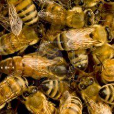 Una joven fue atacada por un enjambre de abejas al proteger a su bebé