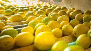 trump suspendio por 60 dias la importacion de limones argentinos
