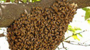 Falleció un hombre de 94 años luego de ser atacado por un enjambre de abejas