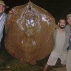 Tres amigos pescaron una raya de 150 kilos en el paraje El Guaycurú