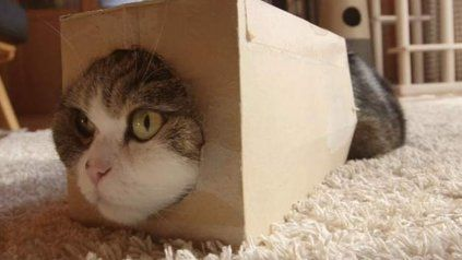 El gato Maru es el animal más visto en la historia de YouTube