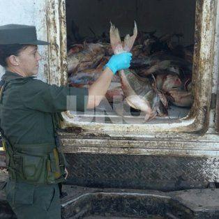 Para Santa Fe. Los pescados fueron llevados hacia la granja La Esmeralda.
