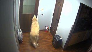 Un perro se escapó de la veterinaria abriendo la puerta con su hocico