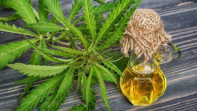 Reglamentan parcialmente la ley que autoriza el uso medicinal del cannabis