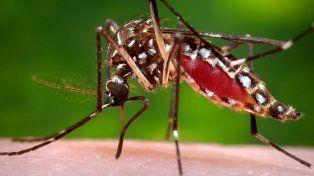 Brindan recomendaciones para evitar las enfermedades transmitidas por los mosquitos Aedes