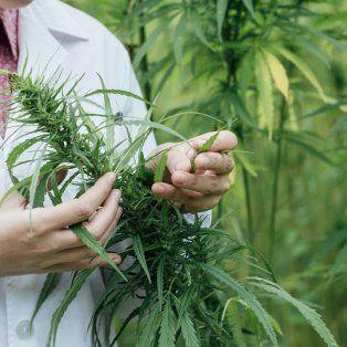 capacitaran a medicos de hospitales santafesinos sobre tratamientos con cannabis