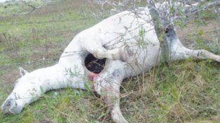 misterio por la aparicion de animales muertos con extranas heridas
