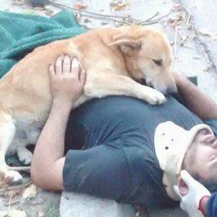 Tony, el perro que abrazó a su dueño tras un accidente