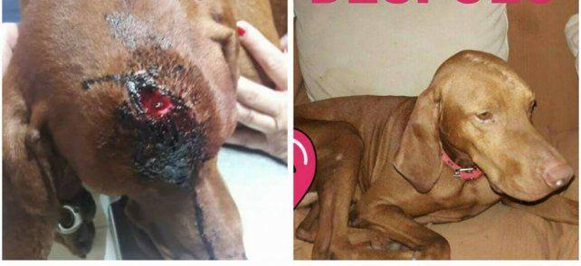 El perro fue rescatado por la ONG Zoolidarios Rafaela