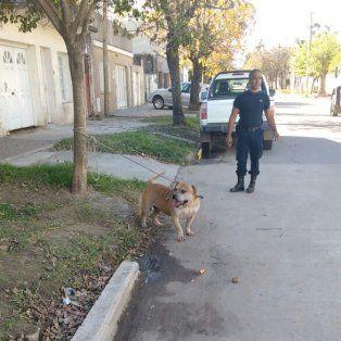 Enojadísimo. El can mordió primero a un vecino y luego a un policía.