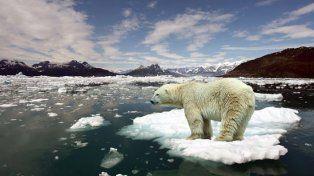 Los osos polares gastan más energía por el calentamiento global