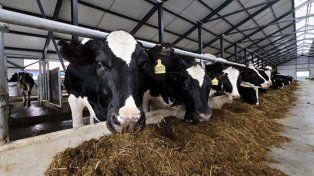 Productores advierten que no hay política lechera y que la industria va a desaparecer