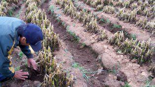 Las heladas afectaron los cultivos de la zona y temen desabastecimiento