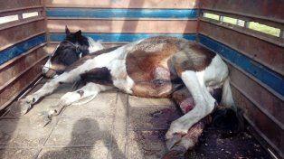 murieron dos jovenes que iban en moto al chocar con un caballo que cruzaba la ruta