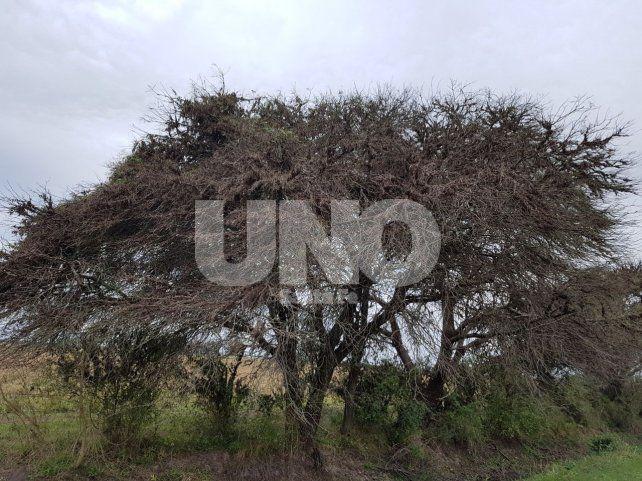 Los impactantes videos del avance de mangas de langostas en el norte de Santa Fe