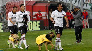 Una loable iniciativa: Colo Colo salió a la cancha con perros en adopción