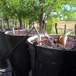 Proceso. Esta harina se obtiene secando el orujo, hollejo o la piel de la uva en un horno especial.
