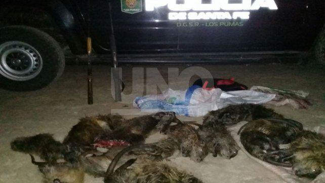 Secuestraron especies depredadas y armas de fuego sin la documentación exigible