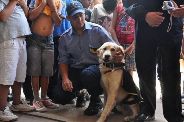 Echan a un jefe policial por prohibir perros y gatos