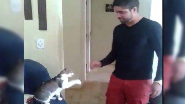Un gato con mucha onda