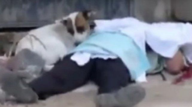 Balearon a un hombre, murió y su perro se quedó junto a él