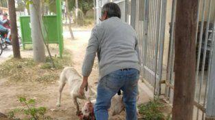 Una bestia que produce un castigo imperdonable a perros de la calle
