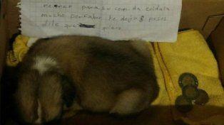 La obligaron a abandonar a su perrita y la dejó con una carta y ocho pesos